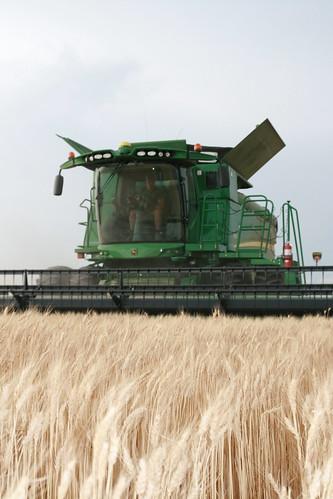 Montana in the combine
