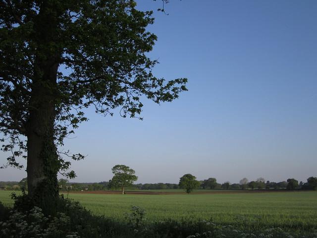 Early morning walk May 2014 014