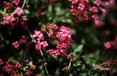 251Zypern Troodos Unbestimmte Pflanzen