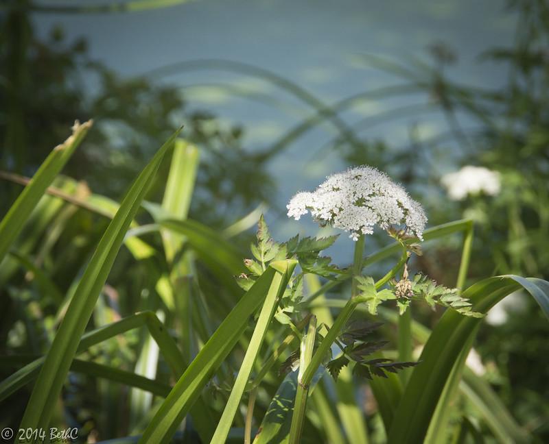 155-365 Flower Friday