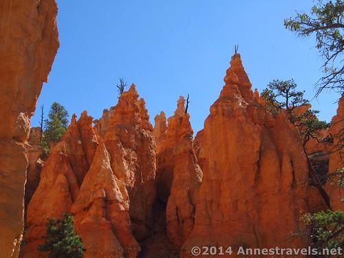 Hoodoos and trees, Navajo Trail, Bryce Canyon National Park, Utah
