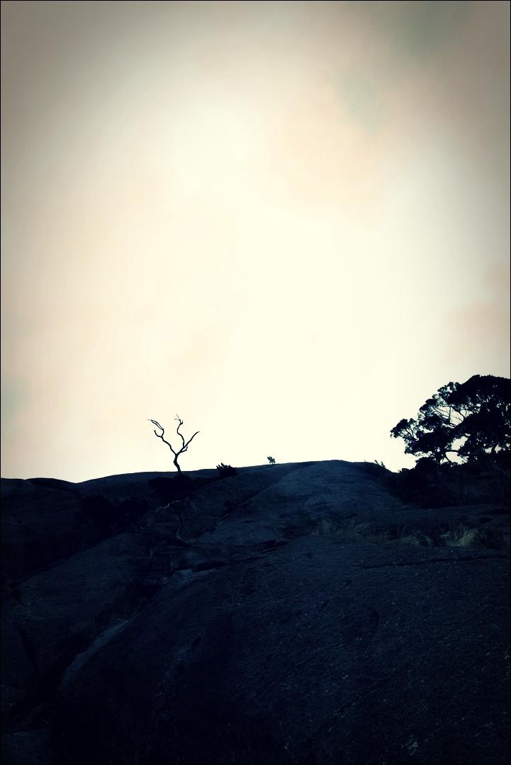 나무-'키나발루 산 비아 페라타.  The highst Via Ferrata Kinabalu mountain '