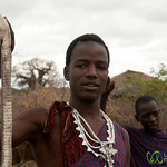 Masai Man Shows Off Egyptian Cobra - Lake Manyara, Tanzania