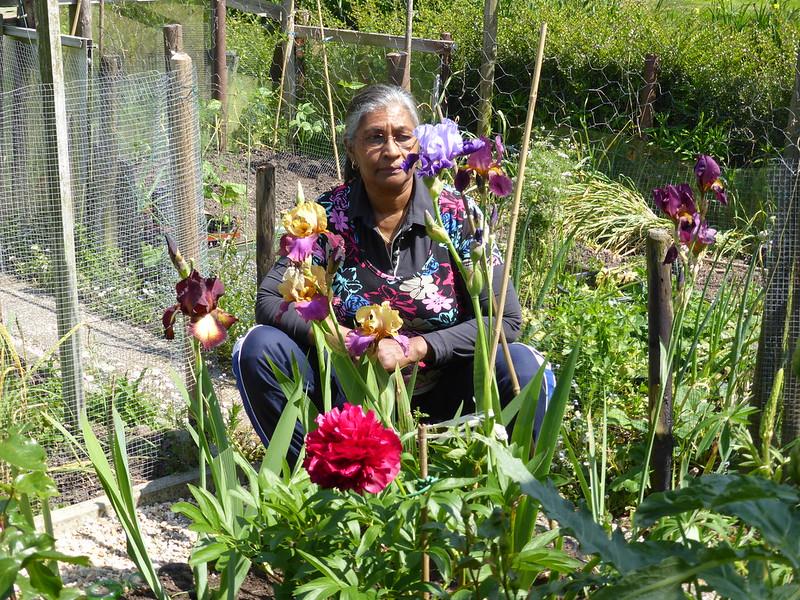 P1010221 Irissen in mijn tuin