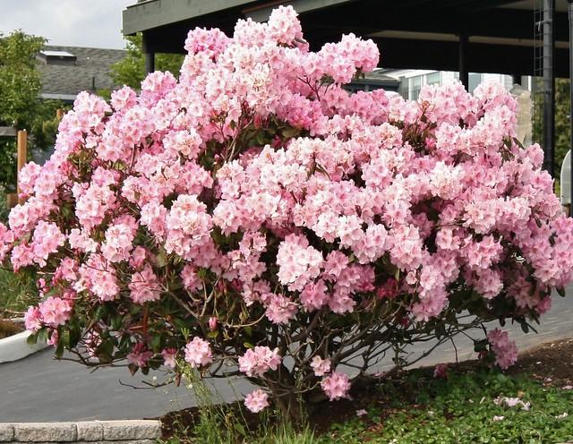 2014-05-11 rhody14 002