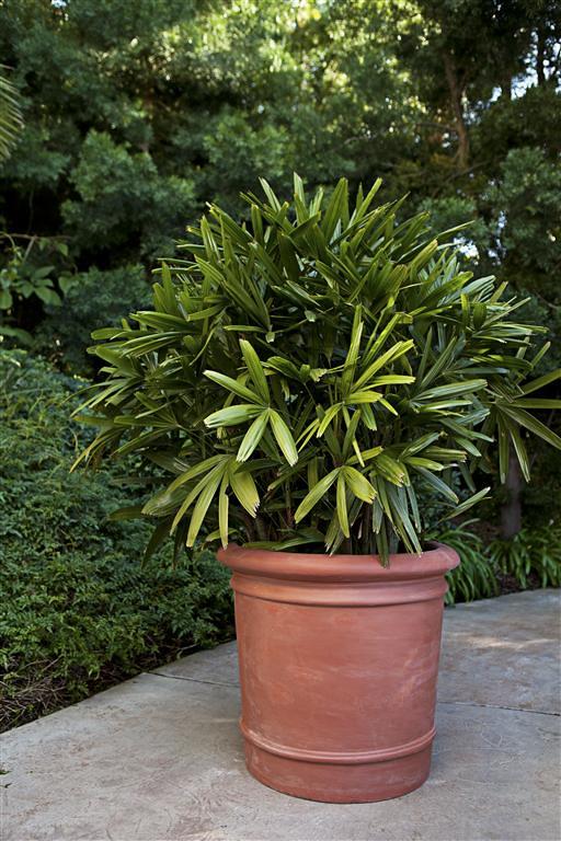 Lerio Planter