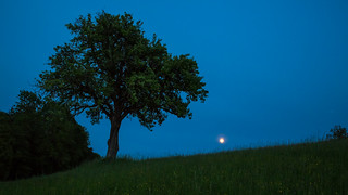 Tree 2/3