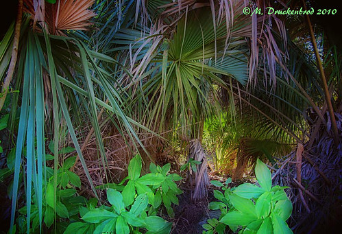 landscape florida scenic palmtree woodedarea ortoneffect landscapephotograph enhancedphotograph