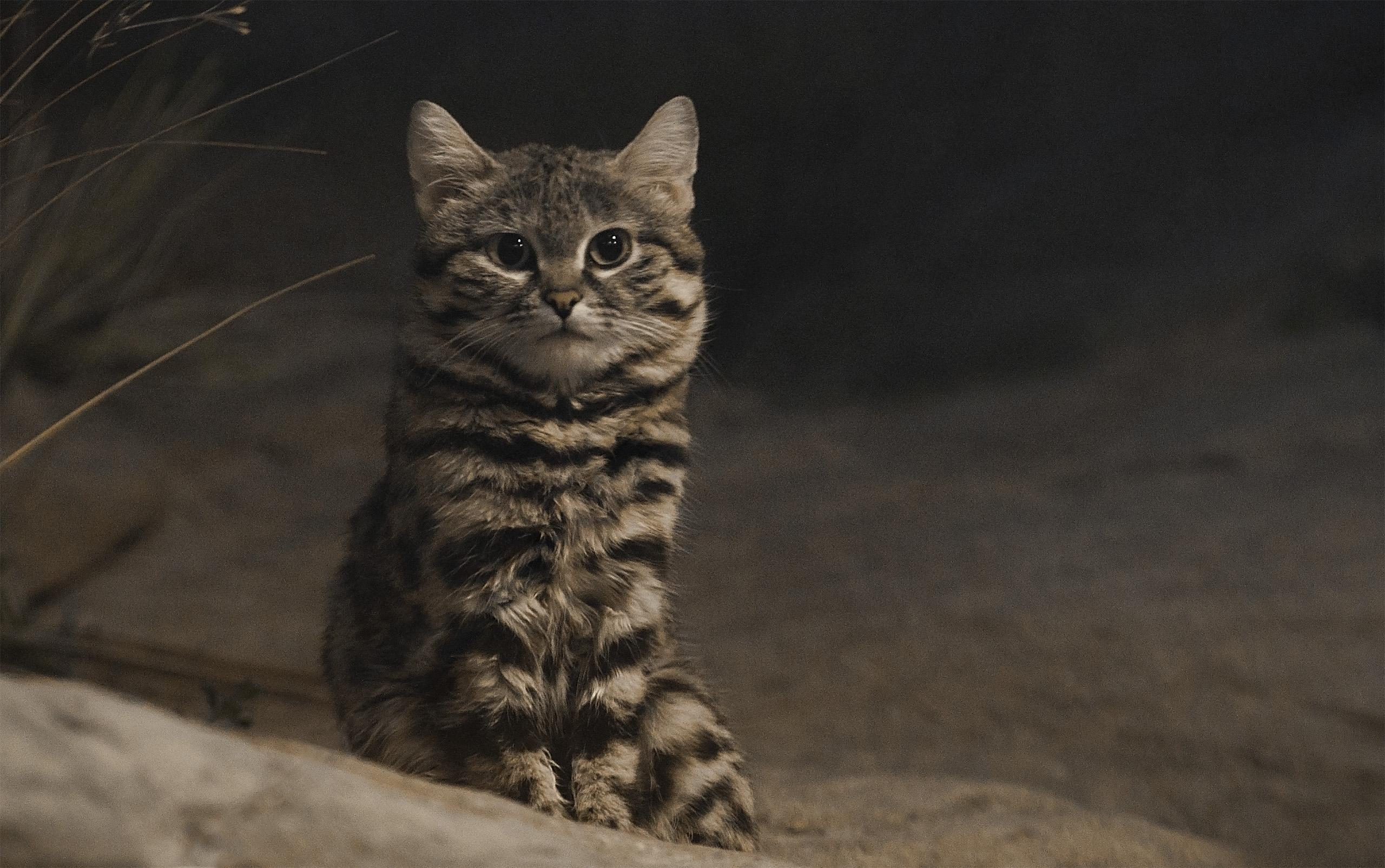 best flea treatment for cats 2017