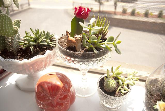 plants8