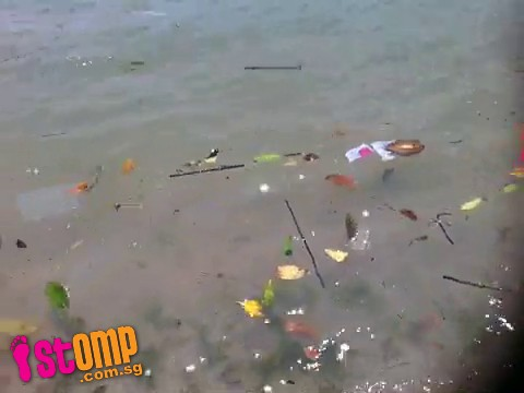 Beach-goer can't enjoy stroll along Changi shoreline as it's strewn with rubbish