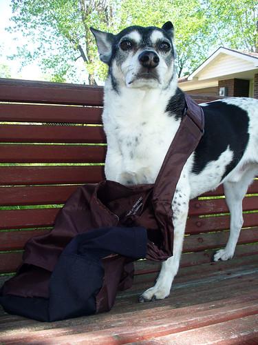 2012-04-16 - Peedee be stylin' - 0002