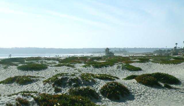 Coronado Beach's dunes