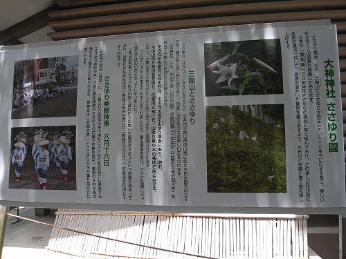 ささゆり園@大神神社-10
