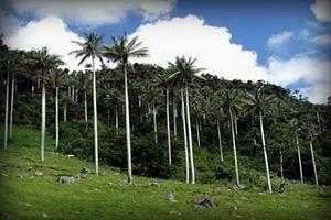 bosque-flora-parque-nacional-cutervo-cajamarca