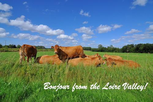 Loire Valley Postcard