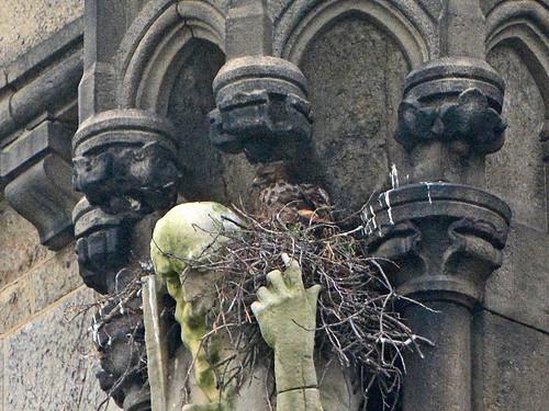 Cathedral Hawk (8772)