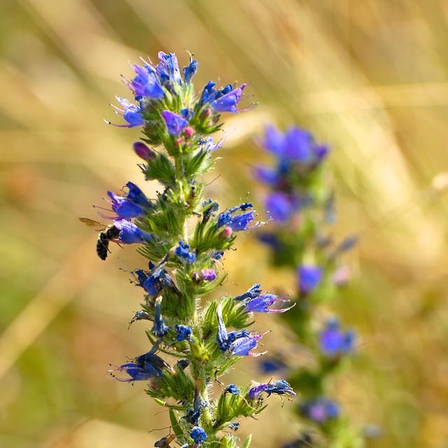 Vip rine butin e flickr photo sharing for Plante 42 chris