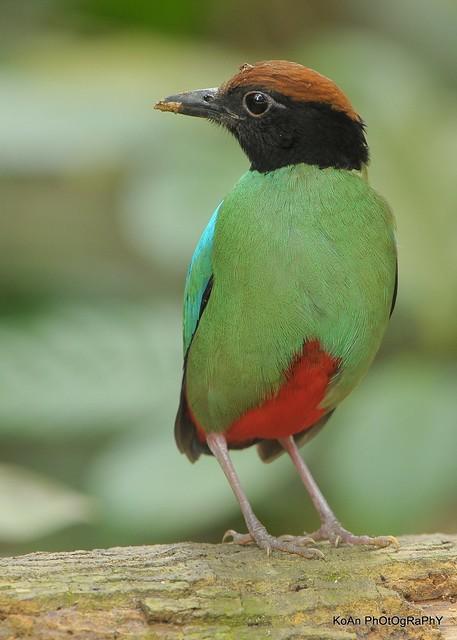壁纸 动物 鸟 鸟类 雀 摄影 小鸟 桌面 357_500 竖版 竖屏 手机