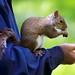 Brave for a nut ... by Christoph Pfeilstücker