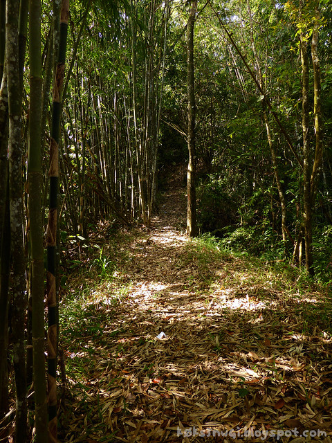 17 Bukit Serumbu Bamboo Trail