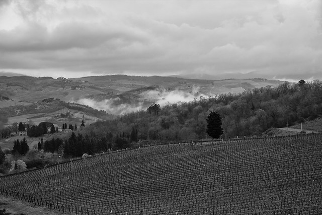 Rolling Chianti Vineyards