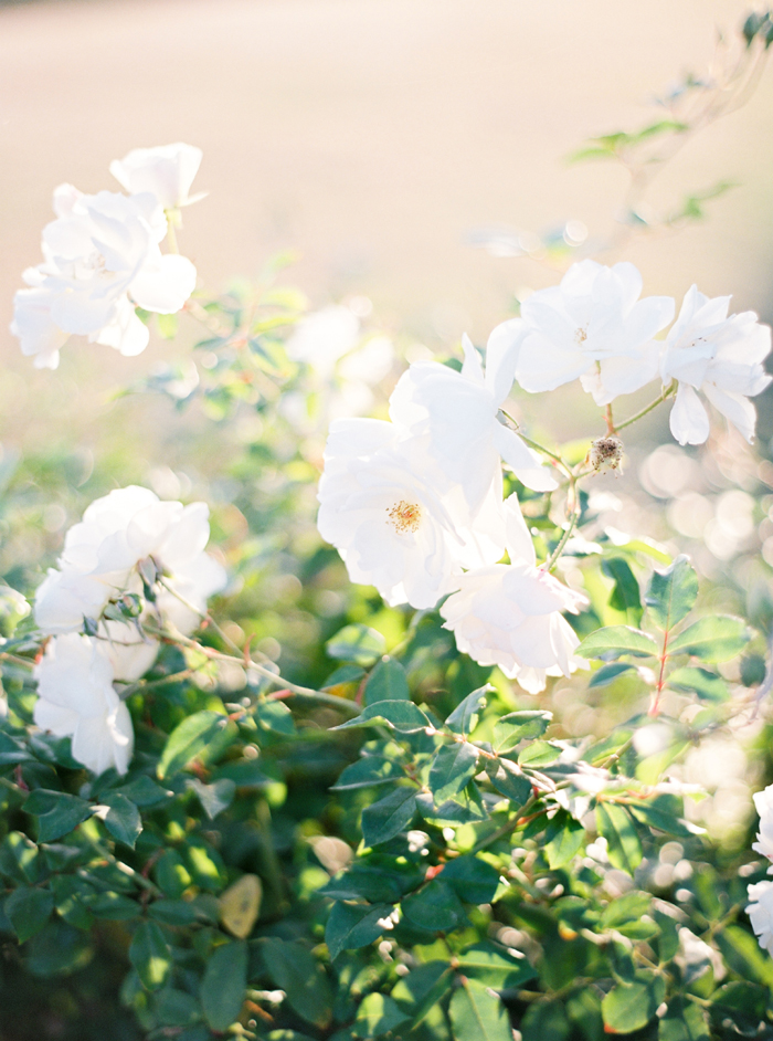 flower-detail-by-Brancoprata