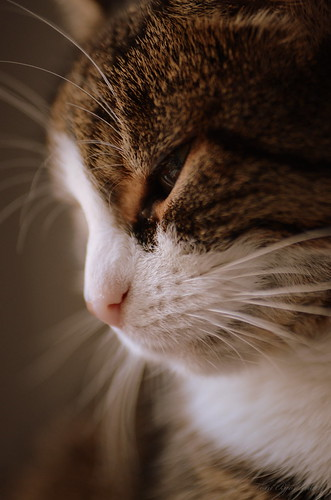 Cat`s Whiskers