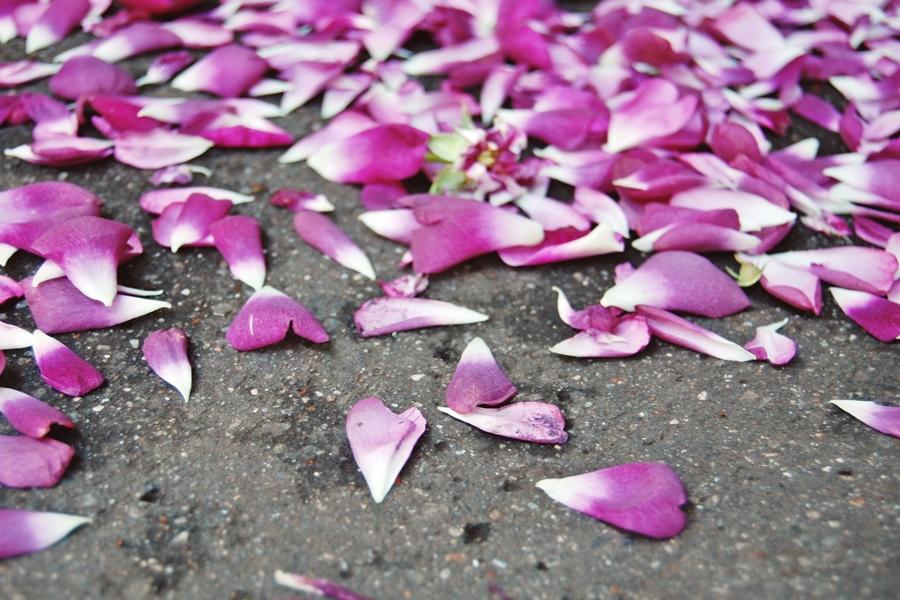 Marché aux fleurs (6)