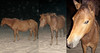 20090808 2320 - Assateague Island camping - ponies - (from the 8's) - SI851716-triptych-1717-1725