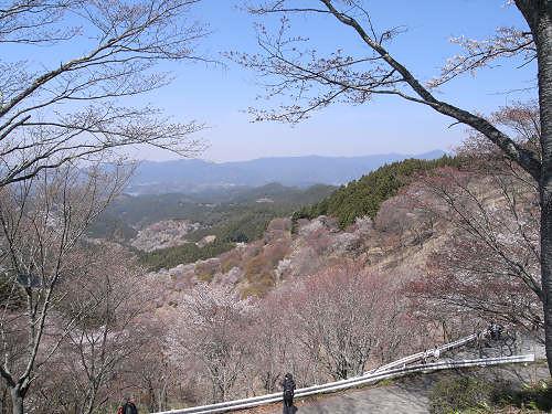 吉野の桜2011@吉野山-14