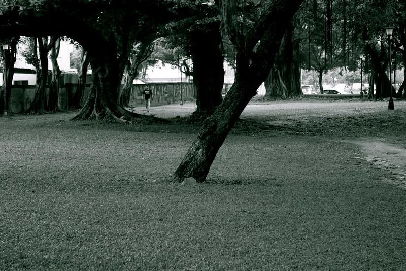 許久不見的台中公園.