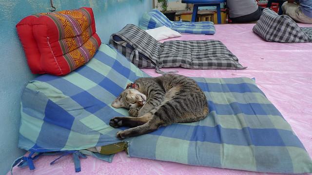 Lazy Sunday. Zzzzz....