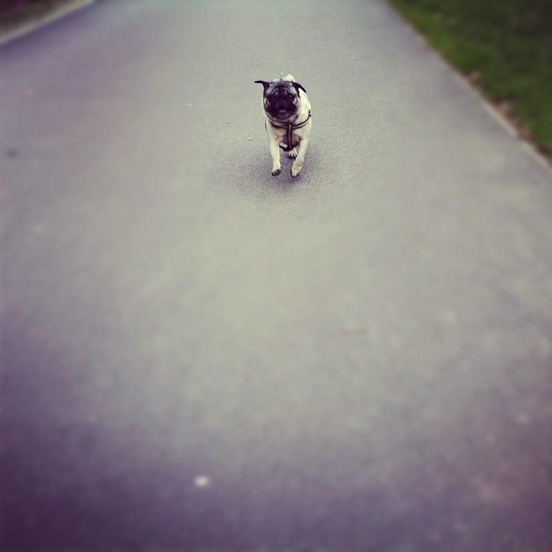 Bruno kann fliegen!