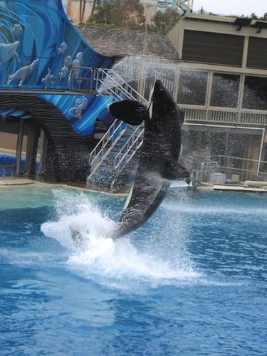 Shamu Show at Sea World