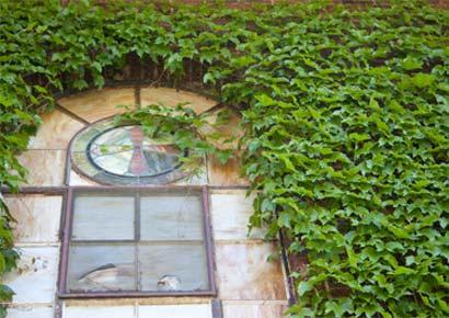Ivy on the window of St. John's Chapel at Newman University