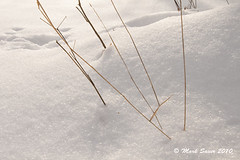 11.10 early snow_grass