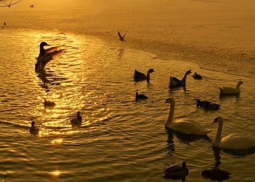 The Leo Bernstein of the golden pond