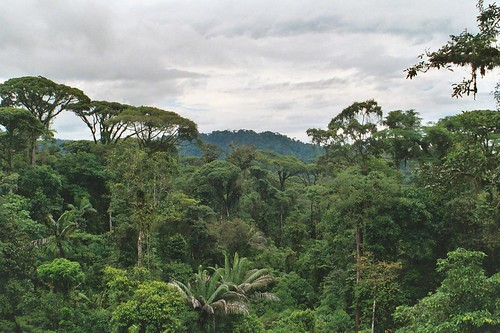 Cat Power – Destruction of the Grenada Rain Forest Continues