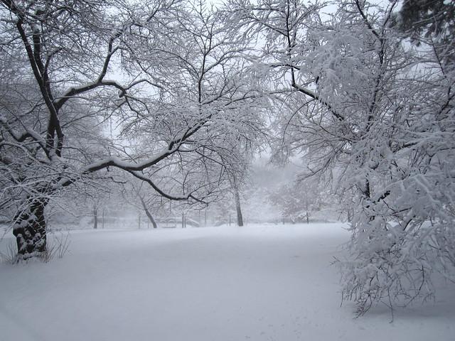Febuary Snow Storm