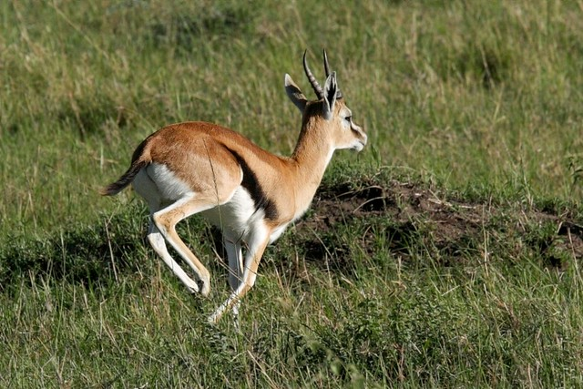 2010 076 Masai Mara b 24