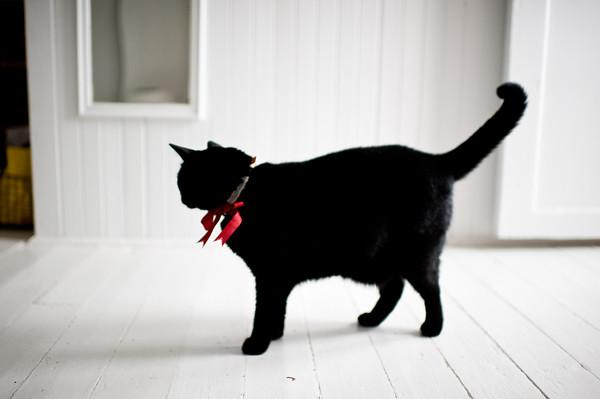 mojo's christmas bow