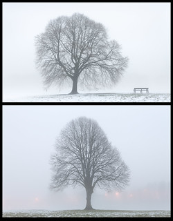 2 Trees in the Fog