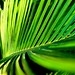 Small photo of Palm frond