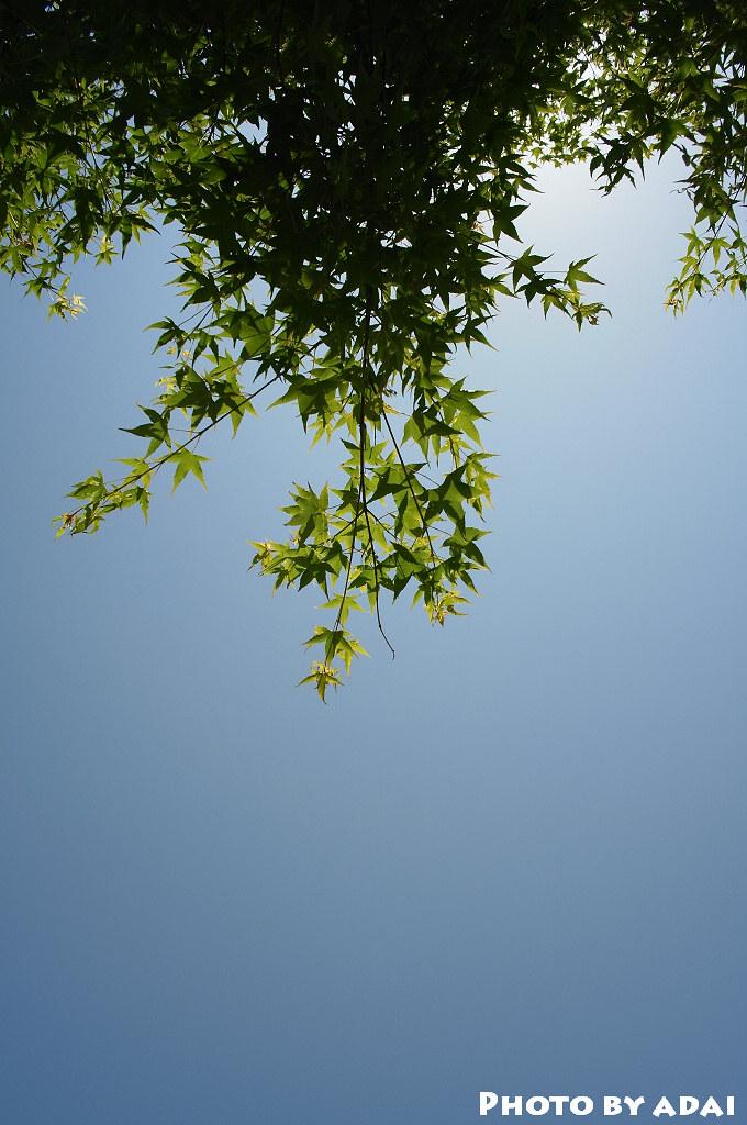 2011.4.20 合歡山