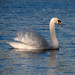 Swan Lake by pearceval