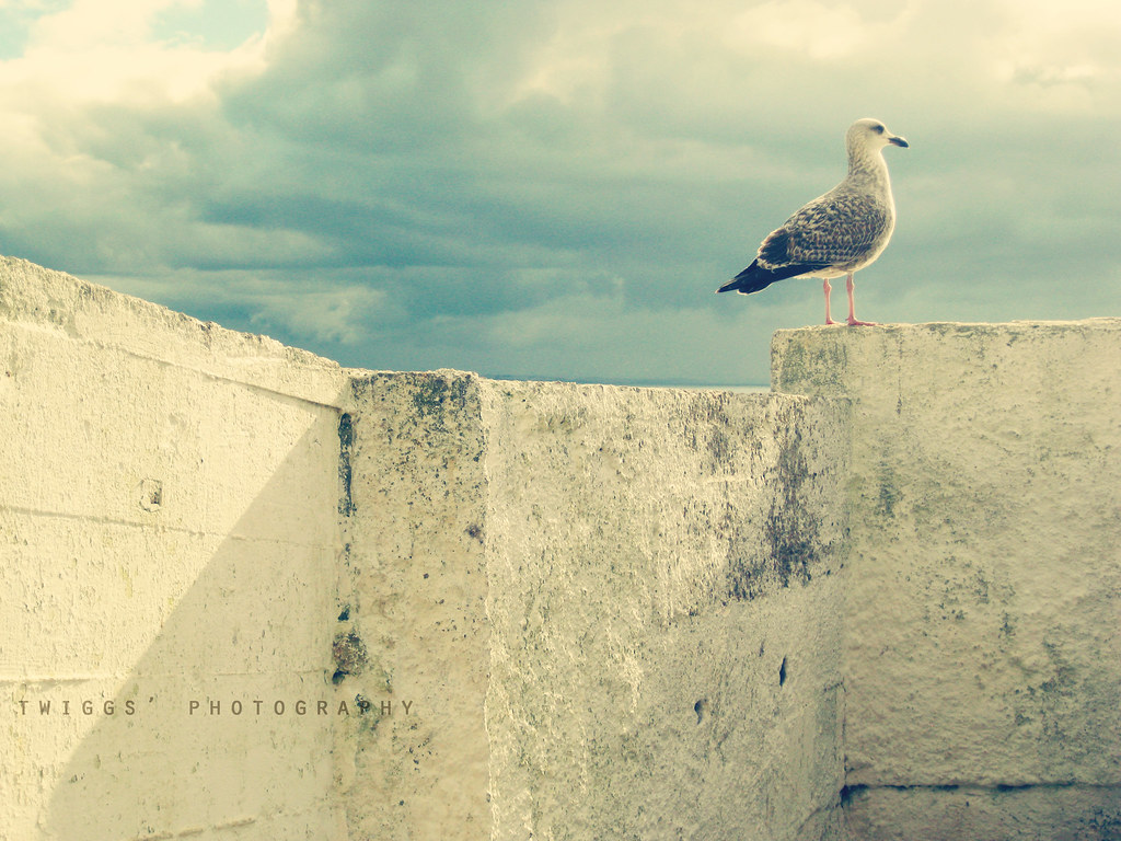 {postcards :: the seagul & the storm}