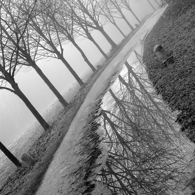 trees reflected wandlebury