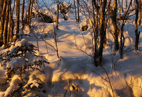 christmas trees winter light snow norway forest photo vinter december foto jul hordaland snø 2010 dese norwegianwood december28 strandvik fusakommune desefoto thisismypostcard