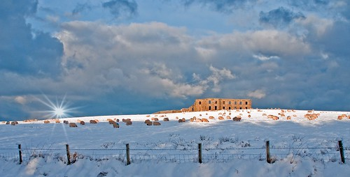 christmas ireland snow sunrise dunes earlymorning northernireland atlanticocean castlerock ulster bishopspalace mussendentemple areaofoutstandingnaturalbeauty casuewaycoast poorfreezingsheep poorfreezingme